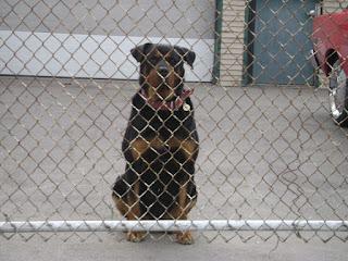 rochester-junkyard-dogs-02.jpg
