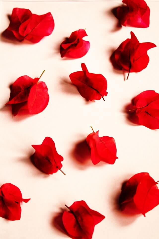 Red Petaled Flowers HD Copyright Free Image