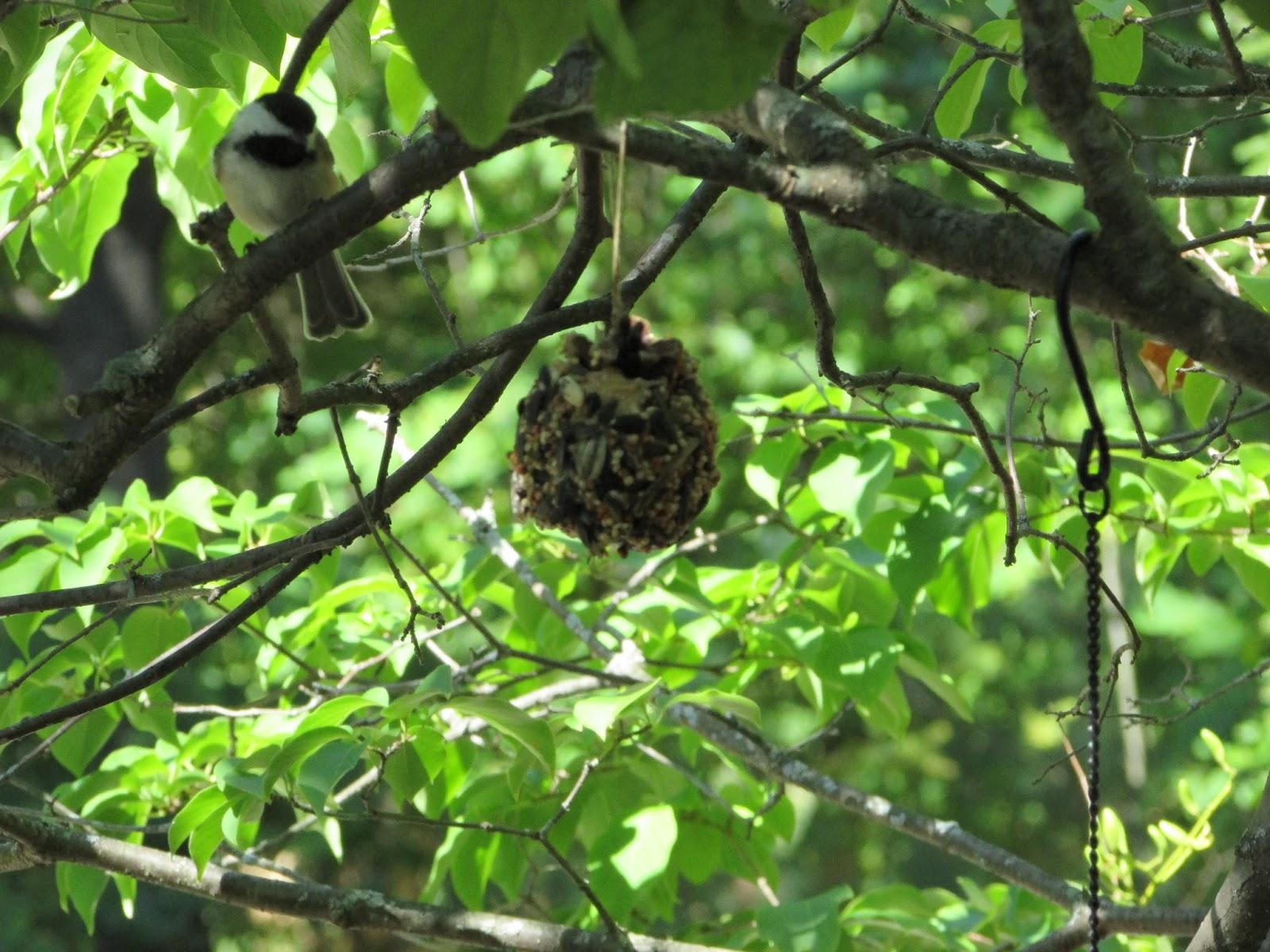 Hipknitized : DIY Natural Pine Cone Bird Feeders