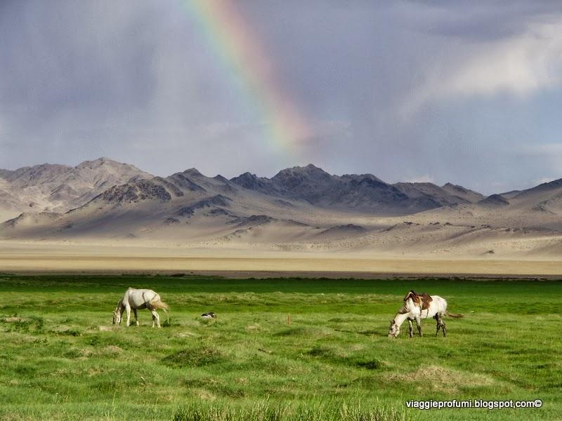 Mongolia, cavalli al pascolo nella steppa