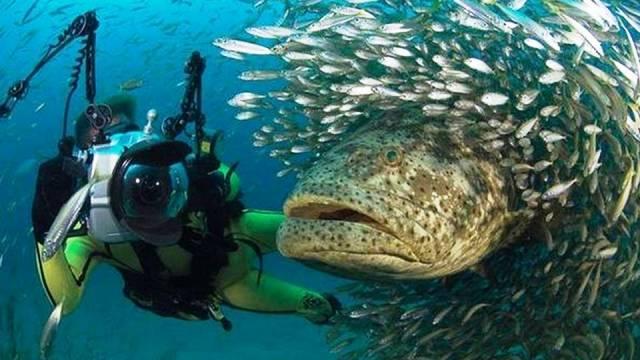 ท่องเที่ยว, แนวหินปะการัง, มัลดีฟส์, สถานที่ดำน้ำ, สถานดำน้ำทั่วโลก, อันดับสถานที่ดำน้ำ, เกาะเต่า ประเทศไทย (Koh Tao Island, Thailand)
