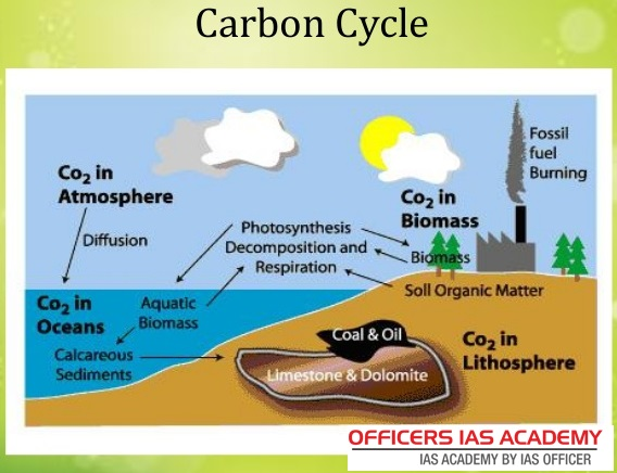 The Carbon Cycle Steps - Circuit Diagram Maker