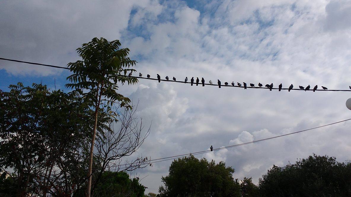 Πώς να πάρει ένα μεγάλο πουλί αγχώνεστε