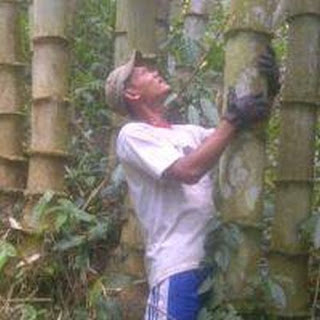 Bermodalkan pengalam kerja akan seni kayu di Jepara pada tahun 1994. Iseng-iseng, Pak Ngatmin, 26, belajar secara otodidak dari You Tube. Kemudian ia melakukan eksperimen dengan menggunakan biola nganggur. Kini, jasa bengkel senantiasa memasok 20 - 25 biola pada setiap bulannya ke Jakarta, Tangerang, Depok, Bekasi, dan Bandung.