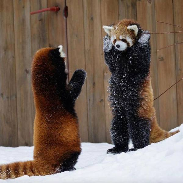 Funny animals of the week - 8 July 2016, best animal photos, cute animal picture, funny animal gallery