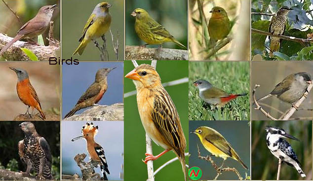 Birds Name Meaning & Image | Necessary Vocabulary | Bird