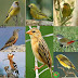 Birds Name Meaning & Image | Necessary Vocabulary | Birds Vocabulary