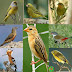Birds Name with Relevant Necessary Vocabulary | Word Meaning & Picture