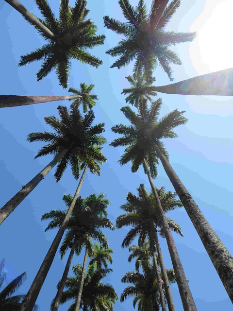 Summertime palm tree