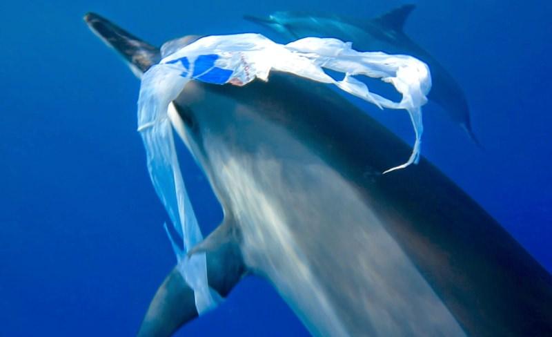 golfinho com saco de plástico na barbatana