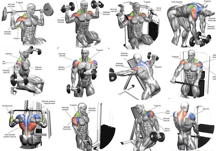 The 10 Best Shoulder Building Exercises for Bodybuilding