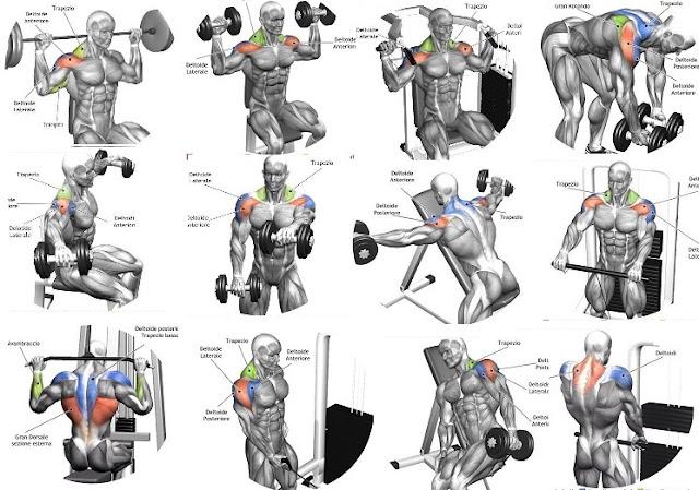 The 10 Best Shoulder Building Exercises for Bodybuilding Beginners - all-bodybuilding.com