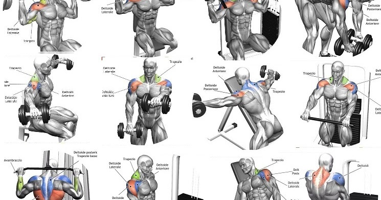how to work shoulders without traps