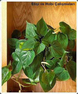 Işığa İhtiyaç Olmadan Yetişen Salon Bitkileri nelerdir?  Bakımı 8
