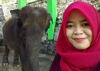 dokter hewan yang tewas di injak gajah