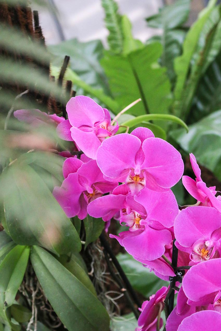 Wellness duisburg orchidee Orchidee Wellness,
