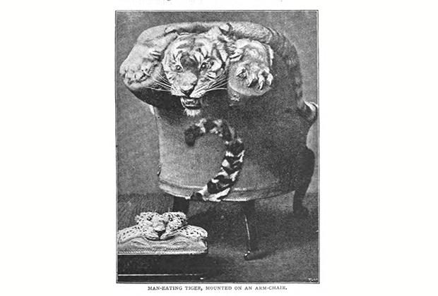 キリンの椅子?19世紀の残酷すぎる動物の剥製【o】