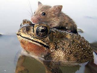 एक शिक्षाप्रद कहानी - मेंढक और चूहे की दोस्ती ! | Motivational Story In Hindi | Gyansagar ( ज्ञानसागर )