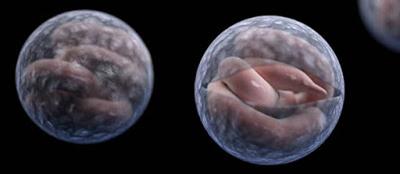protozoa cryptosporidium yang dilaporkan ditemukan di air minum tanpa filter UV