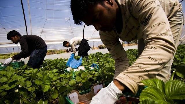 """Επιθεώρηση Εργασίας: Στο στόχαστρο η """"μαύρη εργασία"""" στα χωράφια"""