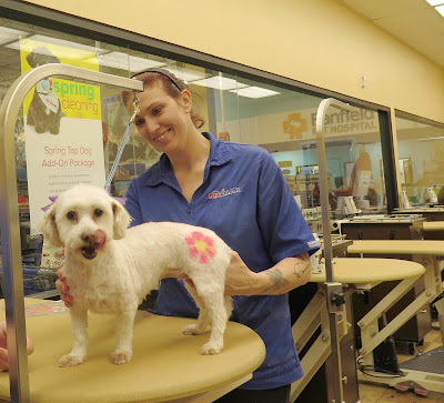 Phoebe loves her PetSmart spa days!  #PetSmartGrooming #ad