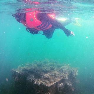 Snorkeling Pulau Panjang Jepara