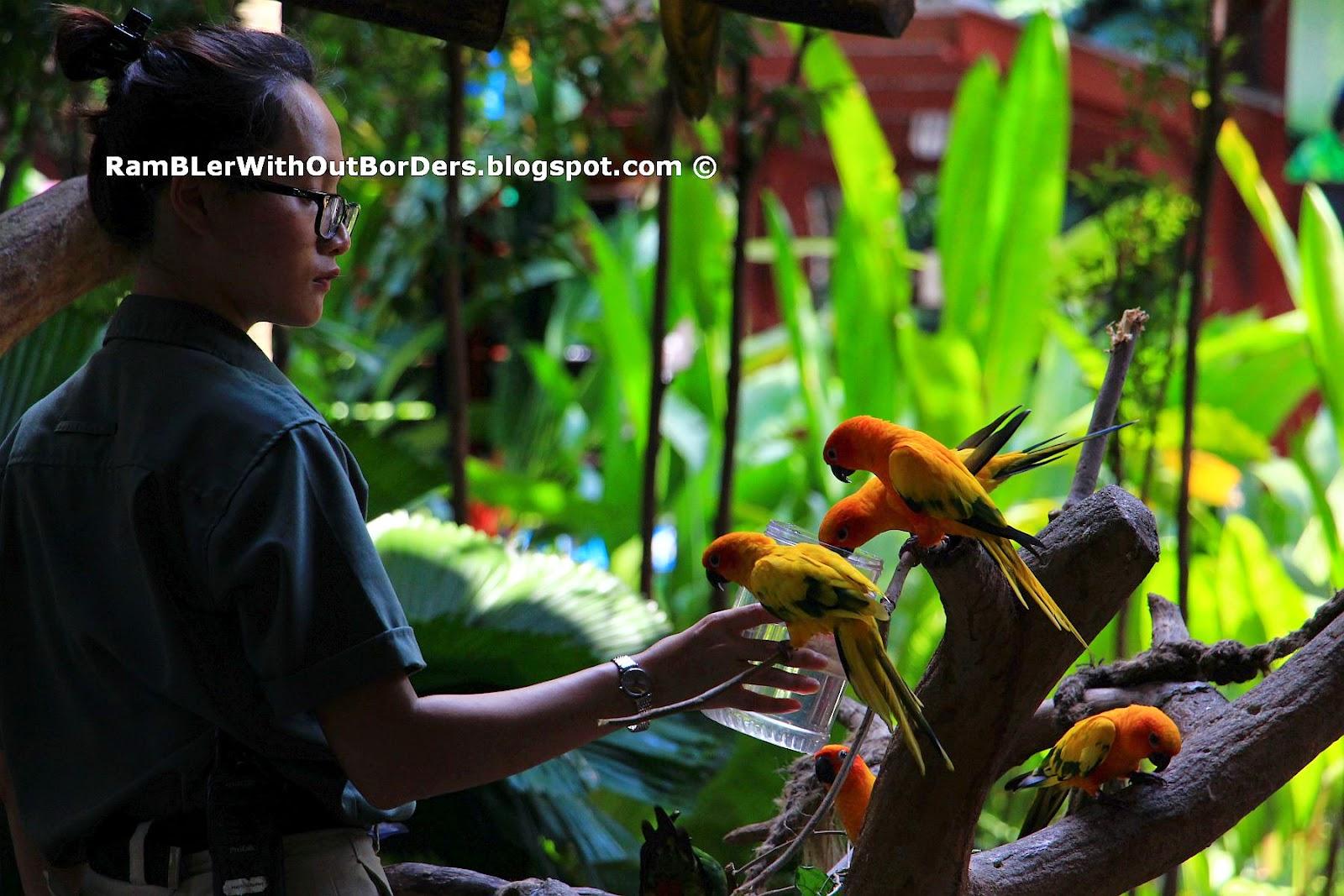 Sun Parakee, Jurong Bird Park, Singapore