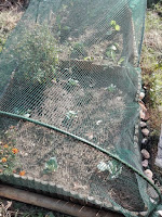 Proteggere l'orto con una rete