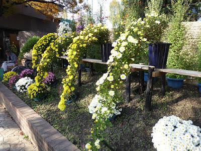 市民の森(鏡伝池緑地)ひらかた菊花展 メイン花壇