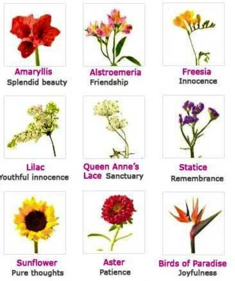 Different Types Of Flowers And Their Meaning
