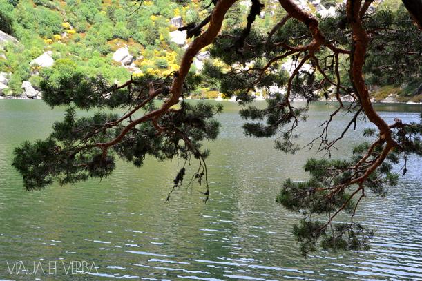 Vegetacion en la Laguna Negra, Soria. Por Viaja et verba