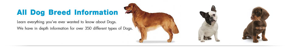 All Dog Breed Information