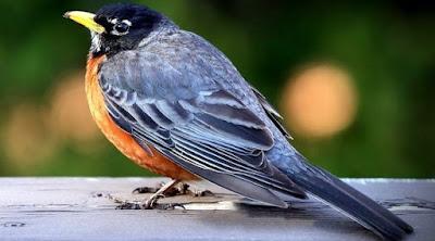 Cara Membuat Ramuan Obat Burung Dari Bahan Alami Agar Selalu Tetap Sehat