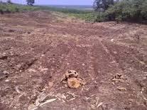 Lahan Pertanian yang Ada di Kalimantan Selatan