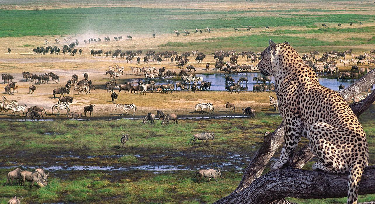 Tanzania Safari To Tarangire Serengeti Ngorongoro Crater With