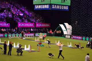 flyball in crufts