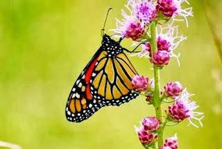 صور فراشات حكاية 2021 اجمل الفراشات الملونة