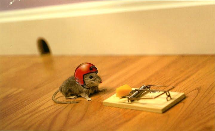 hızlı fare resimleri