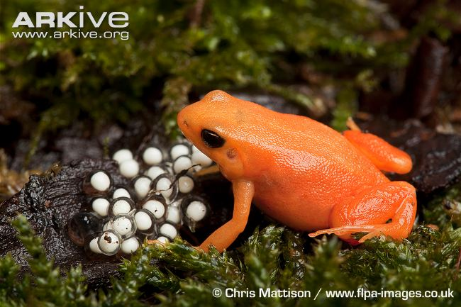 egg laying animals with name - photo #47