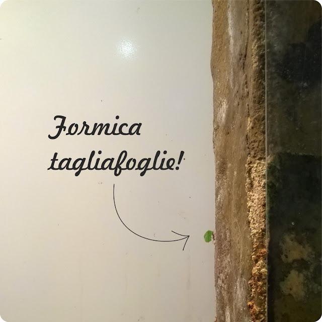 formiche allevano funghi erp mangiarli