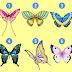 Kupu-kupu yang Kamu Pilih Dapat Mengungkapkan Sisi Tersembunyi Kepribadianmu
