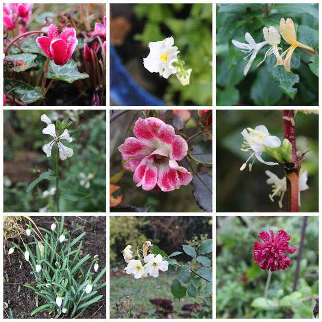A collage of 9 flowers in my garden, December 2015