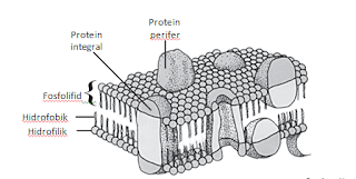 Struktur organel sel