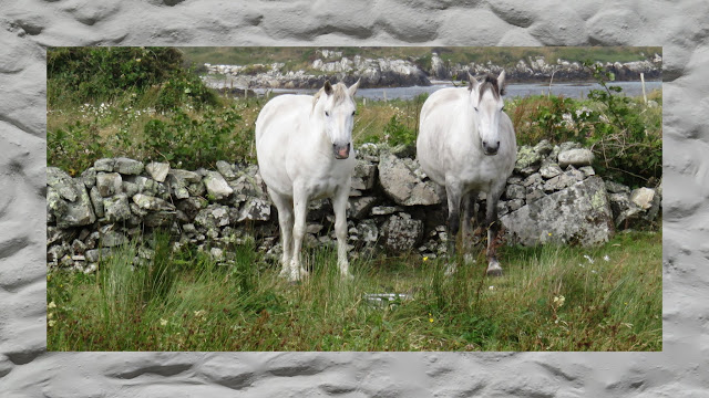 Weekend in Connemara - Connemara Ponies