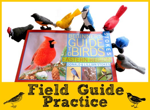 Childhood Beckons: Field Guide Practice and a Giveaway with Safari Ltd!