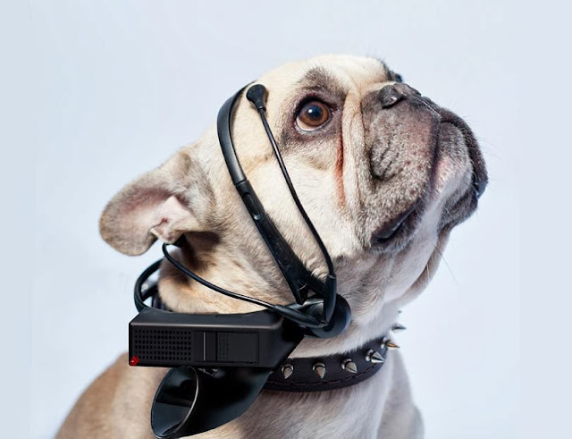Coolest Dog Products and Gadgets (15) 11