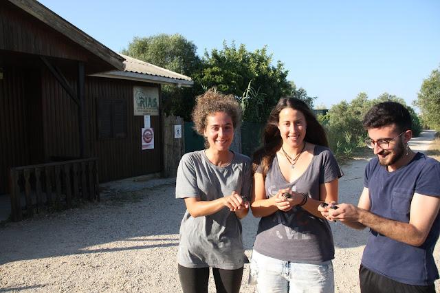 Devolução à Natureza de 4 andorinhas-dos-beirais