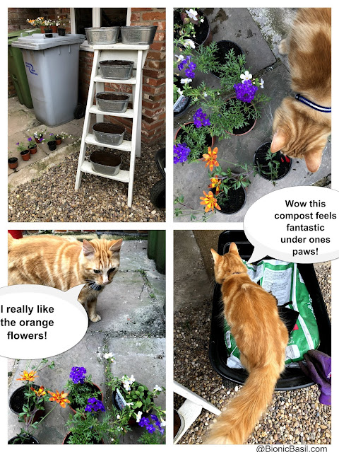 Gardening with Cats ©BionicBasil® Flower Ladder