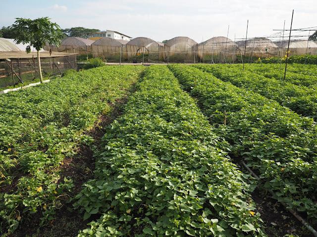 Quan Fa Organic Farm Tour Lunarrive Lifestyle Blog