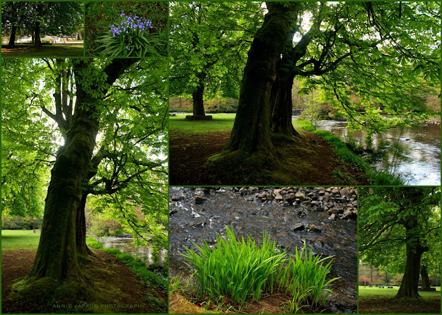 a collage of images of trees and green park